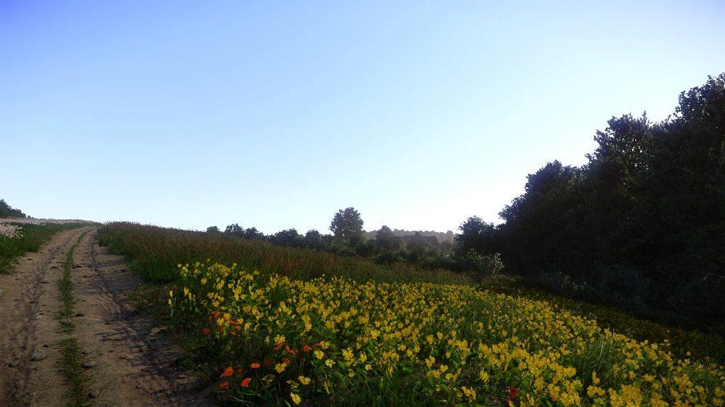 поле лютиков